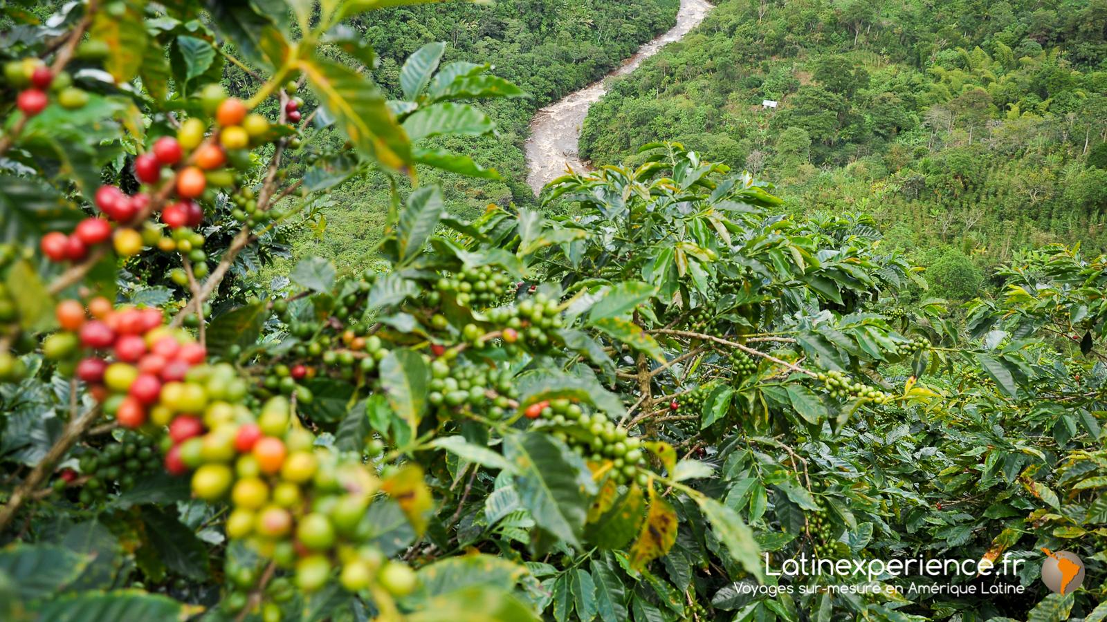 Colombie - Cordillère - café - Quand Partir - Latinexperience voyages
