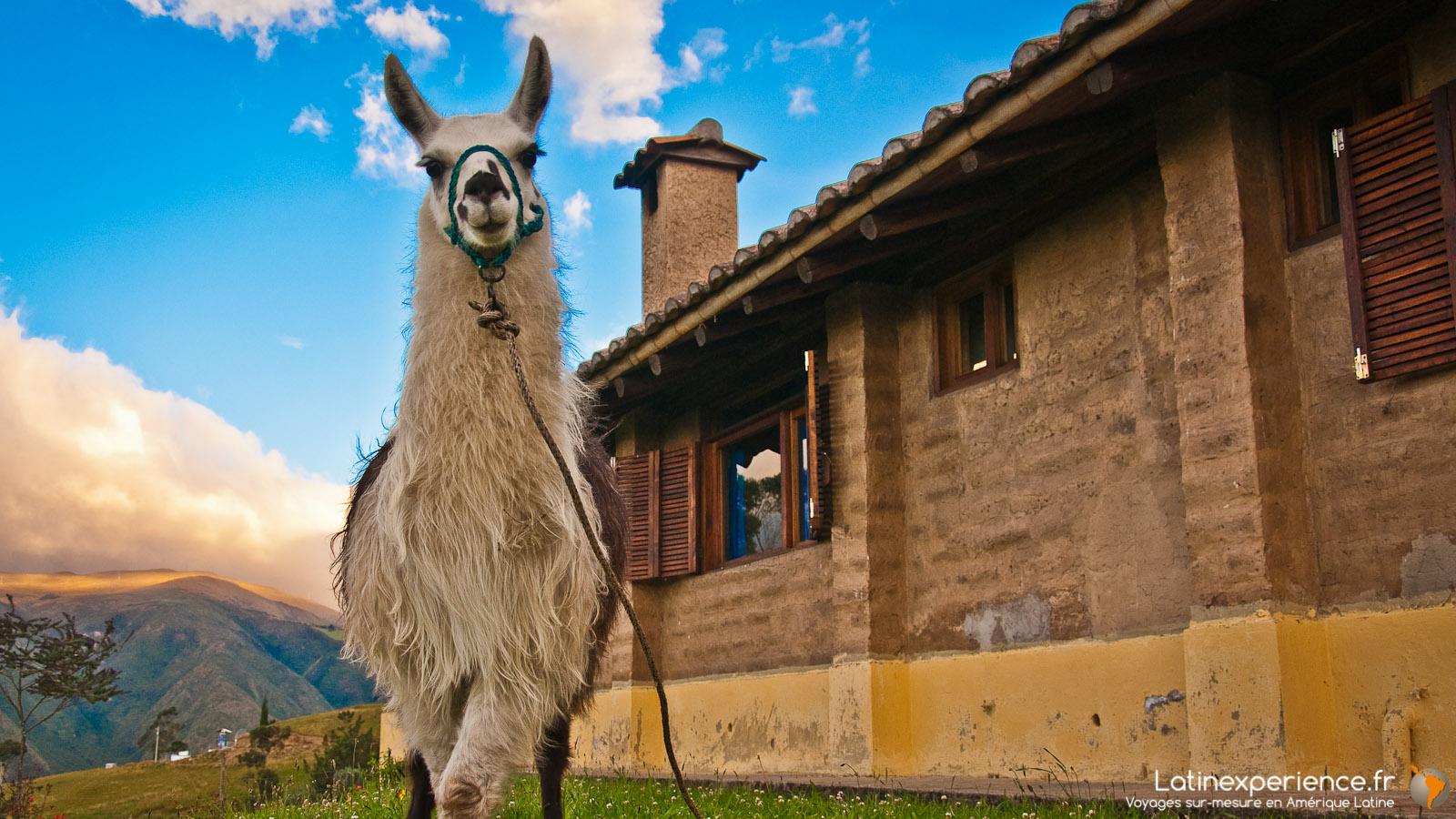 Equateur - Lama  -  Communautaire - Latinexperience voyages