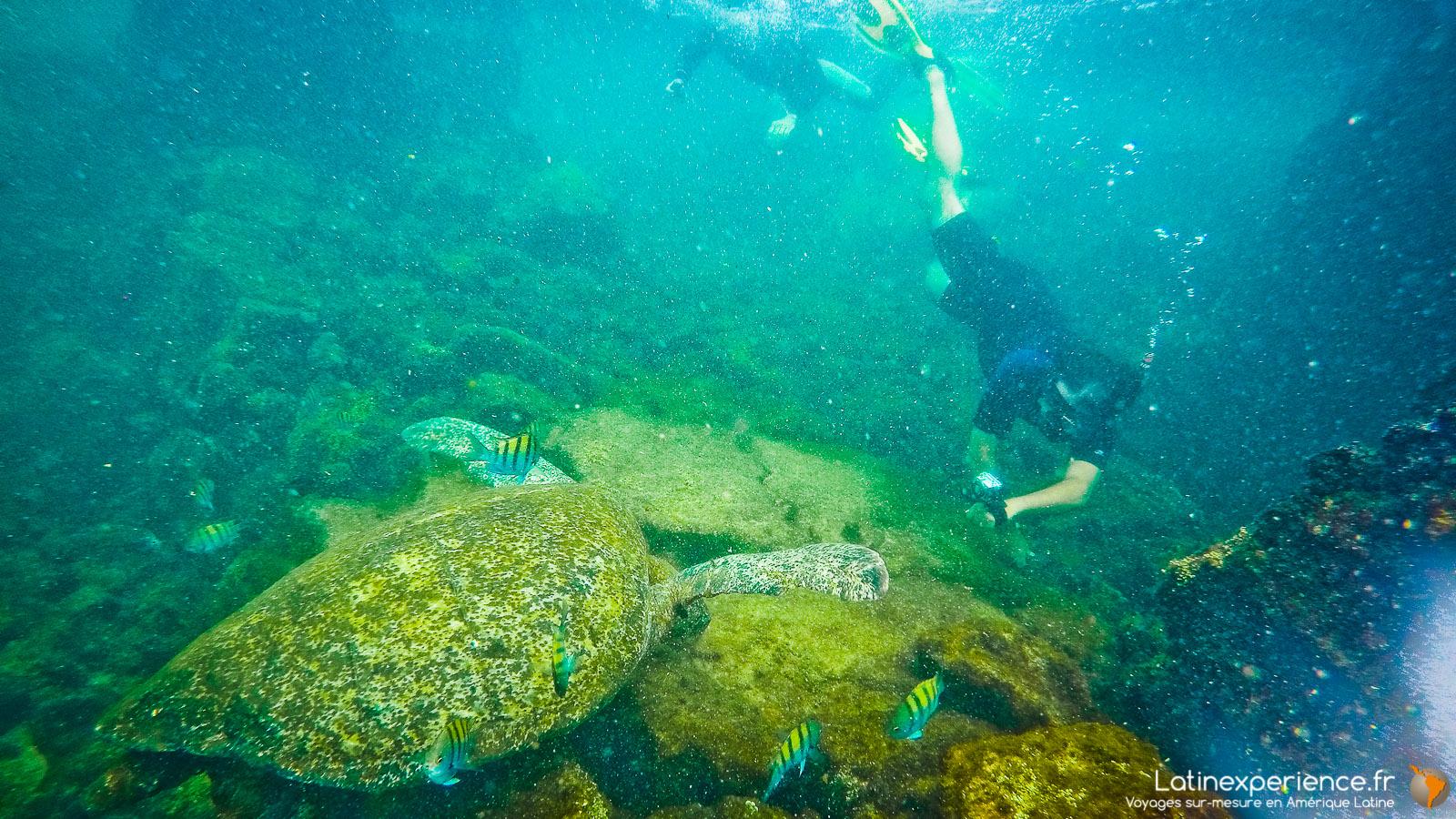 Galapagos - Snorkeling - Latinexperience voyages