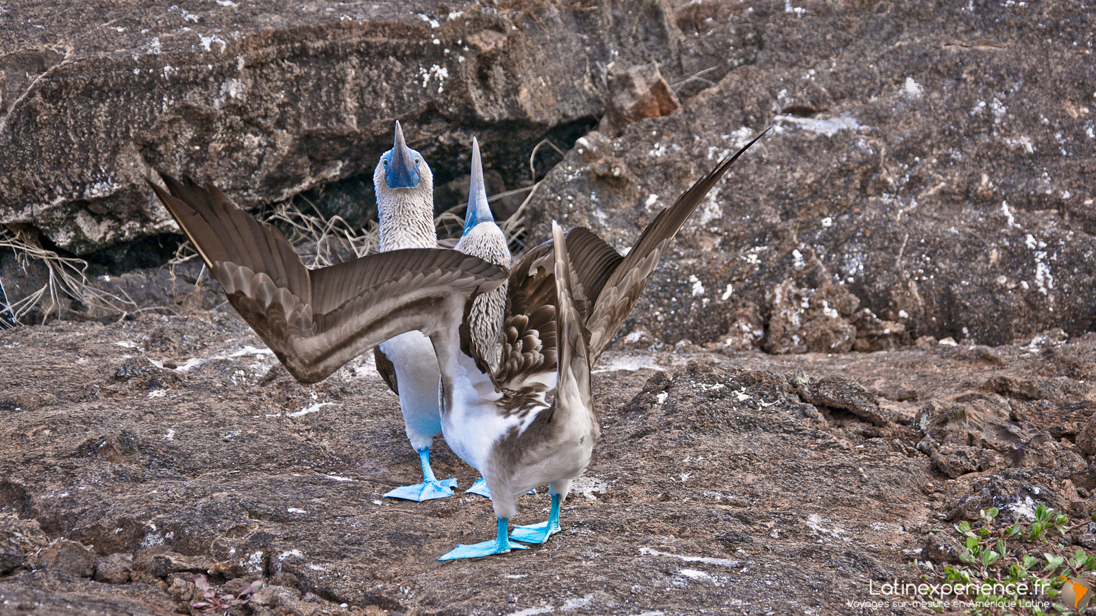 Galapagos - Los Tuneles - Latinexperience voyages