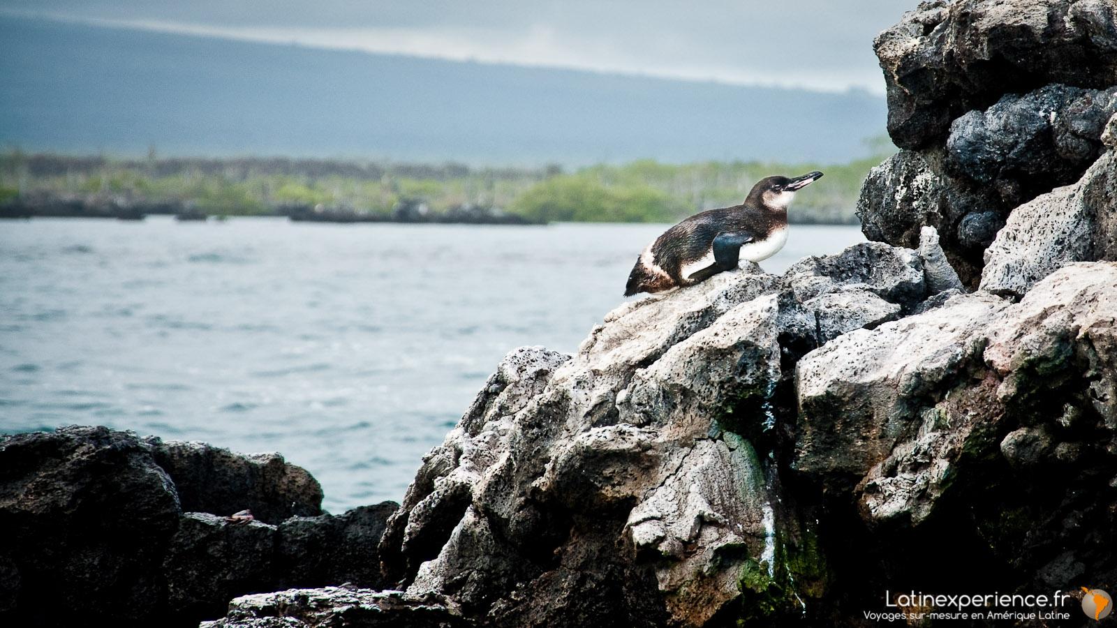 Galapagos - Los Tuneles - Pingouin - Latinexperience voyages