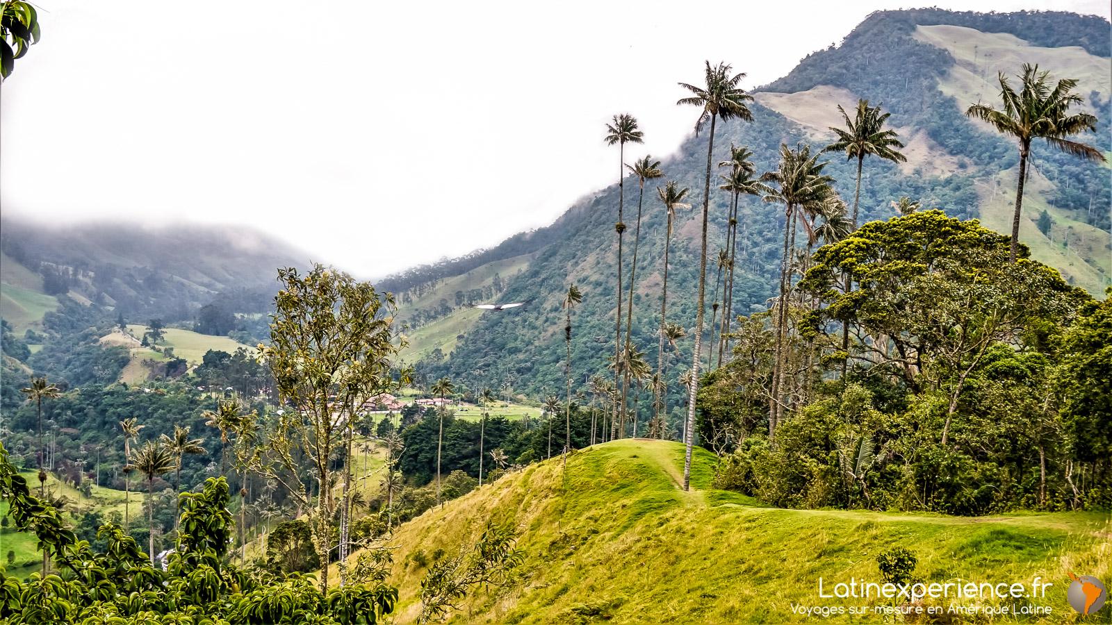 Colombie - Salento - Parc de Cocora - Latinexperience voyages