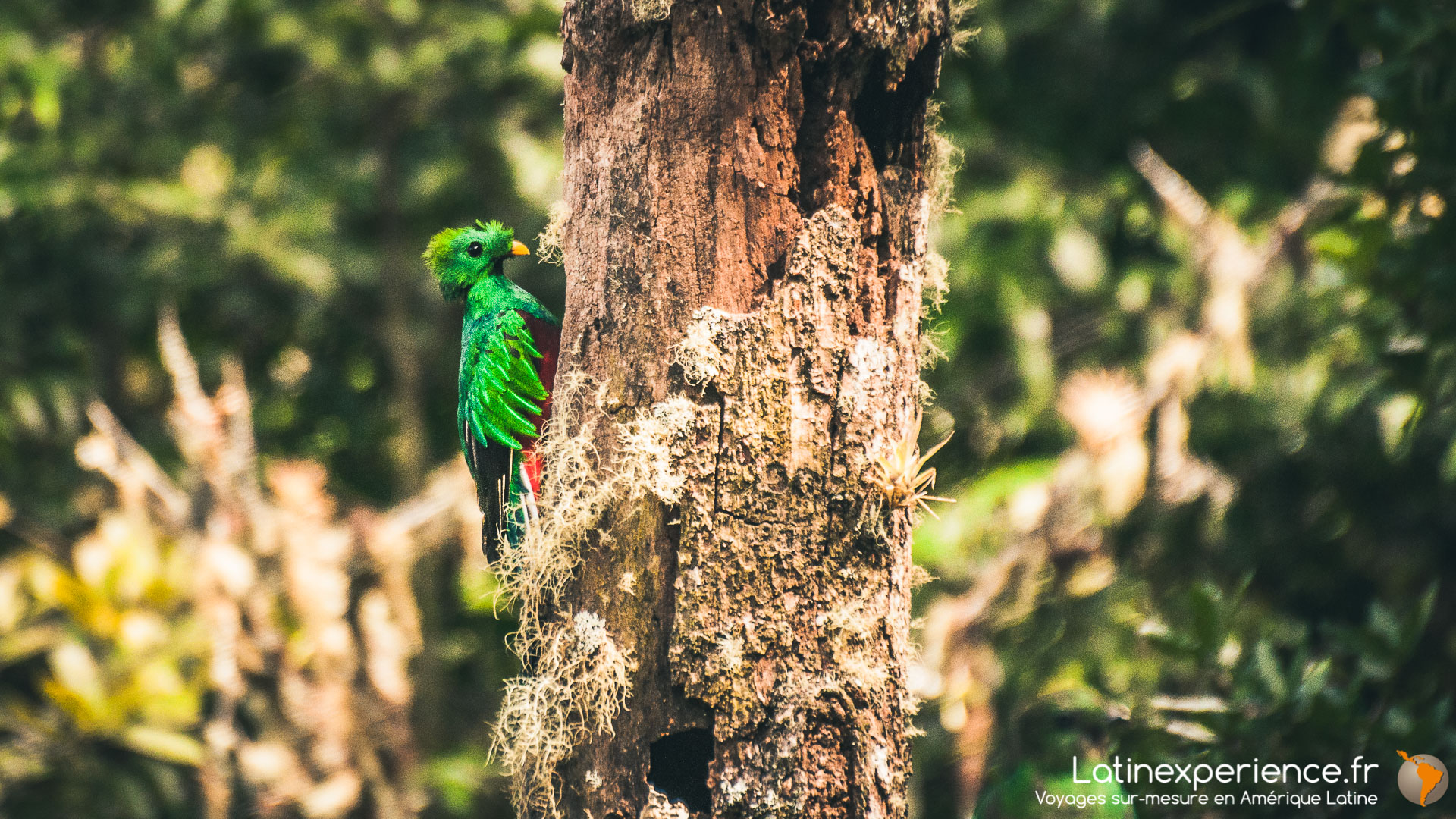 Costa Rica - Quetzal - Latinexperience voyages